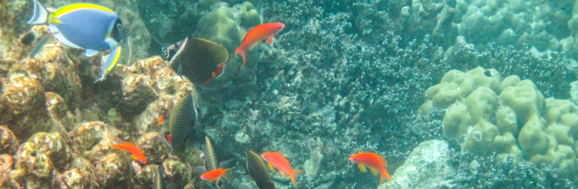 Pulau Weh-10